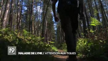 Maladie de Lyme / Attention aux tiques